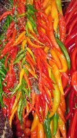 Chilies & Sweet Peppers Seeds
