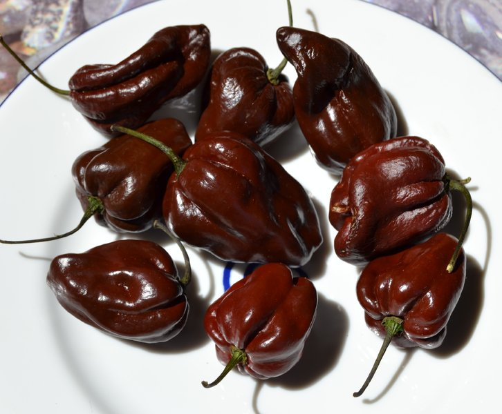 Chocolate Habanero Seeds (Capsicum Chinense) - Spicegarden ...