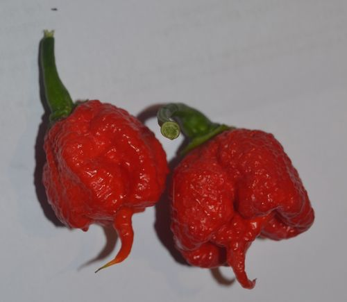 Carolina Reaper Seeds (Capsicum chinense)